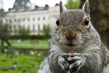 Squirrelz!