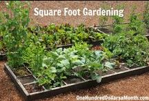Gardening - Square Foot Gardening / I might not be a master at square foot gardening, but I have a ton of experience. Here are a bunch of posts about how you can become a square foot gardening pro yourself!