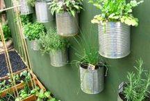 Gardening / Flowers, Plants, Gardening / by Janie Hogan