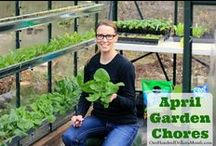Monthy Garden Chores / Garden chores broken down by month. / by Mavis Butterfield