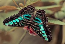 Butterflies & Birds / Beautiful Butterflies & Birds  / by Police_Wife
