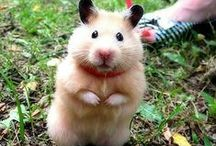 Hamsters ♥
