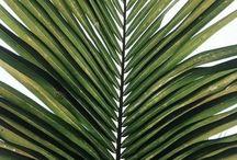 greenery / #plants #succulents #flowers #cacti #trees #shrubs #gardening