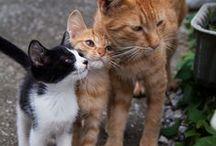 Kitty Cats...