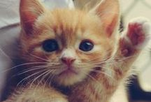 Kittens That Should Adopt Me / Because it's time for a new best friend. / by Tracy Viselli
