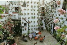 Plants and Yard