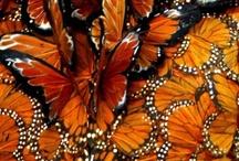 Butterflies / by Sonia de Avila