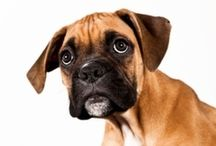 Puppy Training / by Susan Uram