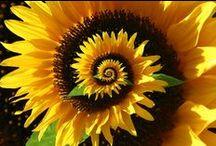 Flowers / by Susan Uram