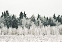 Winter Wonder / by Plaid Poppy