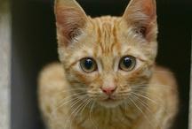 Orange Cats - 2 / by Tiger's Mom