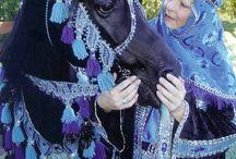 Horsey Halloween / Costumes for horses