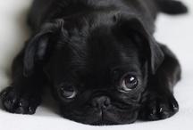 TOO Cute / by Angela Bibb