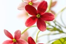 Flowers / by Wendy Chapman