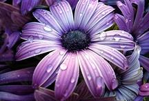 Flowers / by Mariela Ramirez