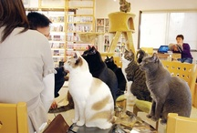 Cat Cafes at The Great Cat www.thegreatcat.org