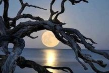Moonlight / Sometimes you just need to look at the moon. / by Patty Marcello