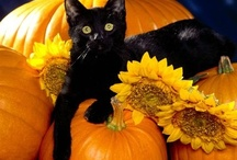 Cats-Halloween--Community Board / Two black cats with yellow-green eyes, purr and fur is a great disguise for hiding beasts that lurk within: the witch's friend and panther's kin.  With hiss and yowl and growl and spit, its eyes aflame, as from the pit: for casting spells or broomstick ride, keep this familiar at your side.  Black panther from the jungle deep will tear you down with lash and leap, will gnaw your flesh or eat you whole, spit out the bones, and sear your soul.  / by The Great Cat