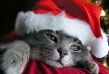 """Cats-Christmas--Community Board / 'Twas the night before Christmas and all through the house Not a creature was stirring, not even a mouse. Cuz the cat had pounced on him and tore him apart Ate his mousey intestines And chewed up his heart. Kitty thought he heard sleigh bells, which made him take pause- He stopped daintily licking the blood from his claws. """"Must be Santa"""" thought Kitty 'Cuz nobody else climbs down the chimney like that. Indeed it was Santa, With a load of presents And all for the cat!"""