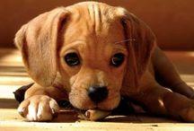 Puppy Dogs! / Man' Best Friend / by Bobbi Pratt