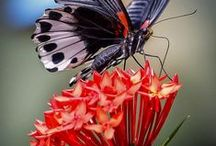 Flowers and butterflies / The colors of the flowers and the flutter of wings make the rainbows in my garden. / by C-ora Raven