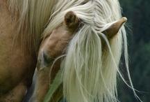 Horses / by C-ora Raven