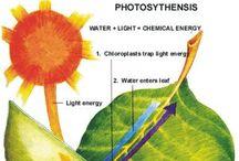 Science: Botany Homeschool / homeschool botany, biology.  curriculum, resources, ideas, multiple grades