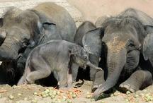 I love elephants / by Linda Jara