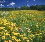 The prairie...