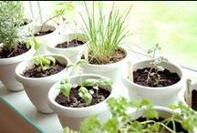 Plenty Plants / by Eva Lučić