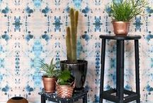 Houseplants / house plants
