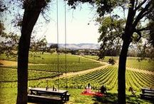 T R A V E L // wine country / favorite things to do, see, eat & drink in sonoma & napa!
