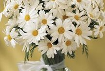 Daisies... / I love daisies.  They're so cheerful!