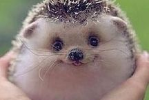 Hedgehogs are so cute!