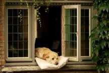 Animals  - Must Love Dogs / ANYONE WHO FEEDS A HUNGRY ANIMAL FEEDS HIS OWN SOUL.  - CHARLES CHAPLIN / by Tammy - Blessed