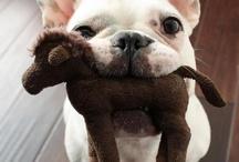 Crazy pets / by Kaylah Markham
