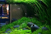 nano and normal tanks, aquariums