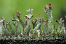 CO2 life / Mushrooms, and plants / by Diána Egri