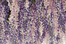 Floral-ity / by Jennifer Bilton