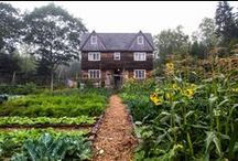 Garden Inspiration / Some inspiring stories and images for gardeners! Grow Good Food!