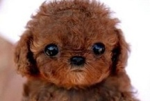 animals that melt my heart / the cutest creatures on the internet. #puppy #kitty #animal #babyanimals