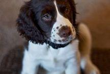 Cute Pets / by Larisa Valek-Severson