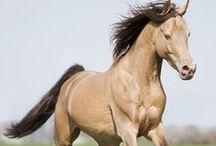 Equus / Majestic.