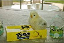 Chickens/Eggs
