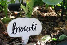 Creative Garden Markers / What better way to remember what you planted where than creative, fun plant markers?!