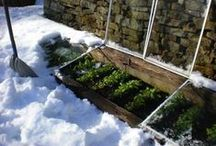 Cold Weather Gardening