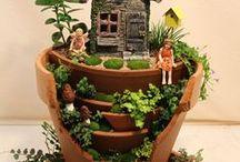 Plants & Flowers / Plants & Flowers