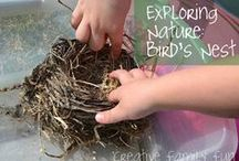Bird Nest Unit Study / After a family at church gave us a beautiful Robin's bird nest, what better way to celebrate than with a bird nest unit study? The beauty of homeschooling!  / by Crystal (crystalandcomp.com)