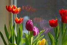 Spring / by Stephanie Frasier