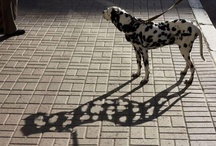 ShadowLight